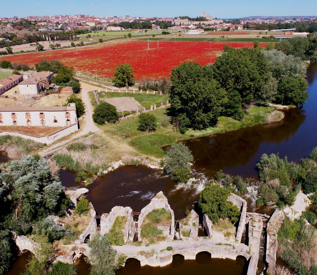 campo de amapolas de Zamora